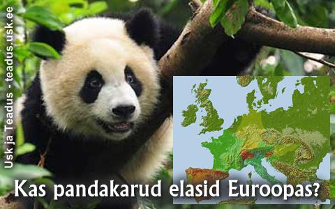 Panda-pandad-karu-karud-euroopa-euroopas