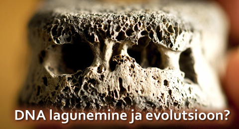 DNA-lagunemine-evolutsioon