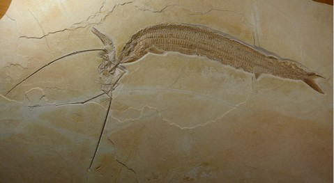 Pterosaurus-lendav-sisalik