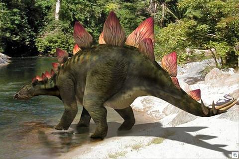 Ta Prohm templi nikerdused - stegosaurus