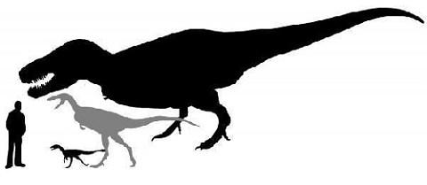 Tyannosaurus_4