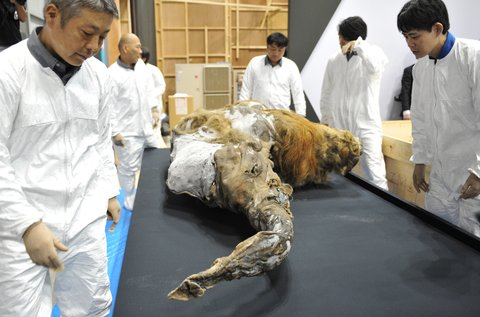 mammut-mammutid-jaaaeg-jaaaja-keskus-3