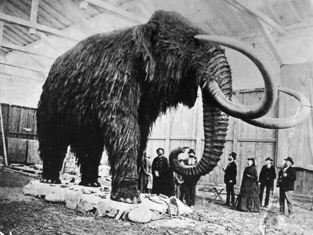mammut-mammutid-jaaaeg-jaaaja-keskus-4