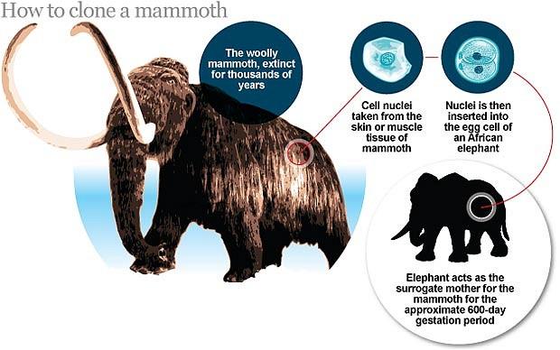 mammuti-kloonimine
