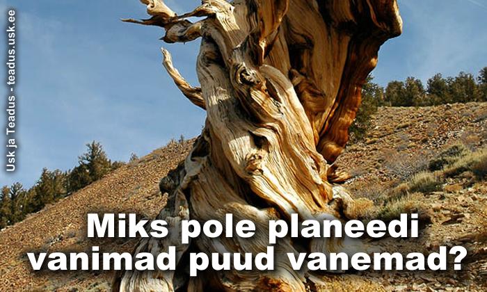 planeedi-vanimad-puud-moistatus-musteerium-viited-piiblile