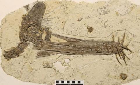 Pterosaur-pterosaurus