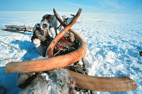 Mammut-mammutid-kylmunud