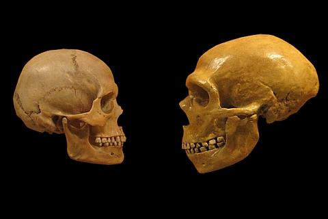 Neandertali-neandertaallase-dna-genoom-2