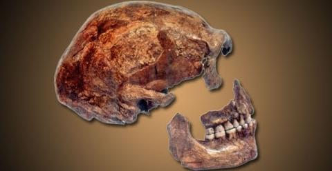 Neandertali-neandertaallase-dna-genoom-3