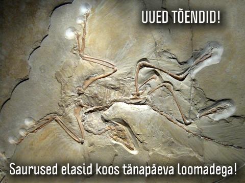 Saurus-saurused-dinosaurused-muut-muudid-valed